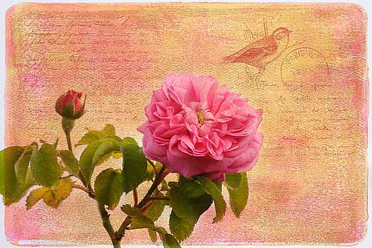 Kim Hojnacki - La Rose
