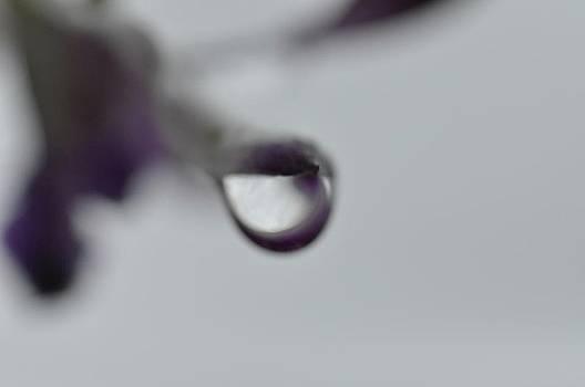 Laavender Tear  by Eagle Finegan
