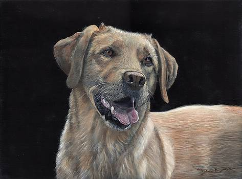 Labrador Portrait by John Neeve
