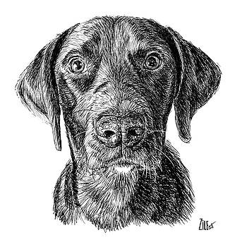 Labrador Retriever @abbeylovesringo by ZileArt