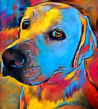 Labrador Retriever by Chris Butler