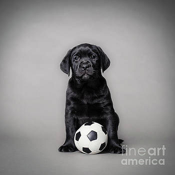 Labrador retriever pupp with ball by Waldek Dabrowski