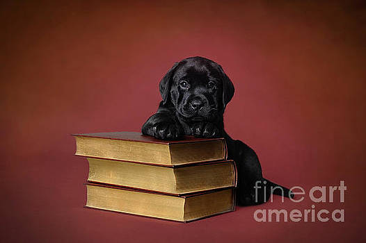 Labrador retriever puppy with books by Waldek Dabrowski