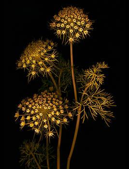 Marsha Tudor - Lace Golden