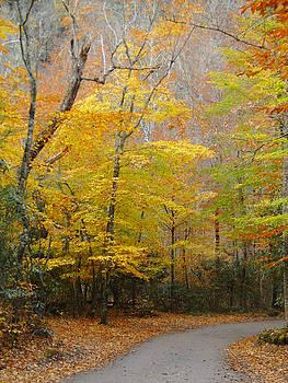 Lacy Fall by Kelly Luquer