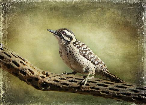 Barbara Manis - Ladder-backed Woodpecker