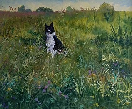 Laddie in the Meadow by Catherine Robertson