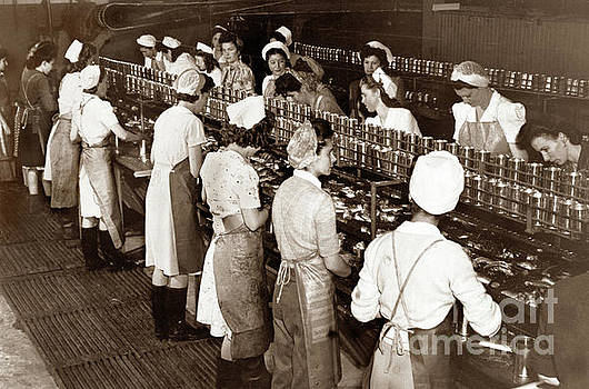 California Views Mr Pat Hathaway Archives - Ladies packing sardines in tall cans monterey 1941