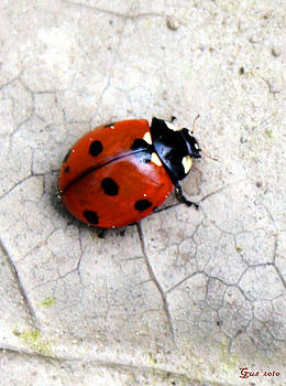 Nick Gustafson - Lady Bug Close up