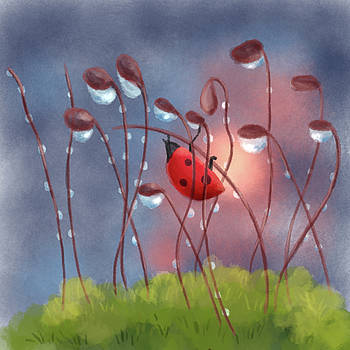 Lady bug in morning light by Xiao Zeng