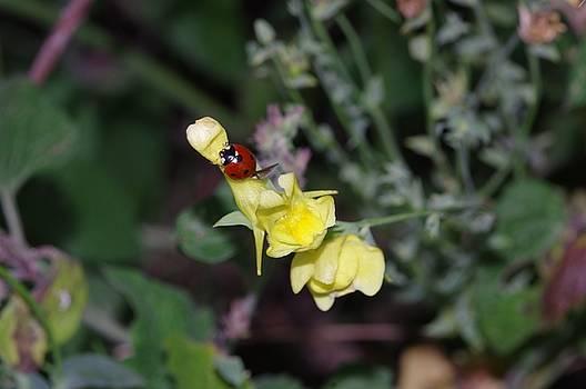 Lady Bug by Jaren Johnson