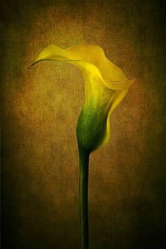 Lady in Yellow by Marina Kojukhova