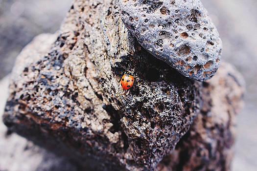 Ladybird  by Martina Uras