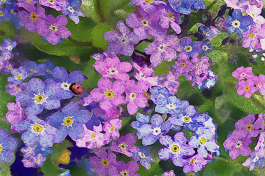 Ladybird in Forget-me-nots by Vanessa Thomas