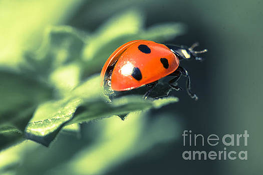 Marc Daly - Ladybug about to fly