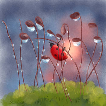 Ladybug in morning light by Xiao Zeng