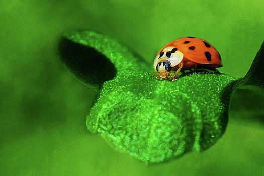 Nikolyn McDonald - Ladybug, Ladybug