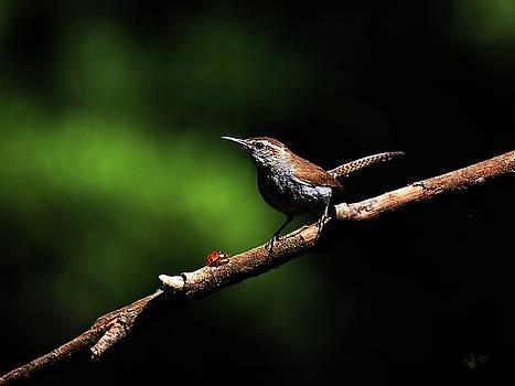 Wingsdomain Art and Photography - Ladybug Ladybug What Do You See . 40D8055