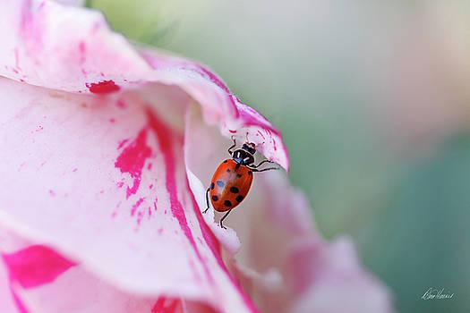Ladybug Lifting Petal by Diana Haronis