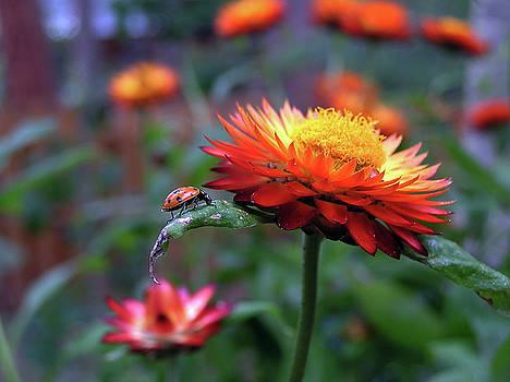 Ladybug on a Leaf by Carol Milisen