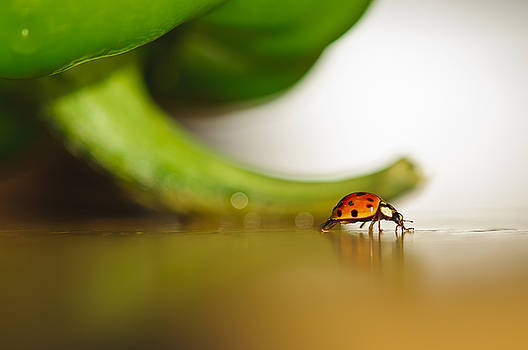 Christine Kapler - Ladybug walking her path
