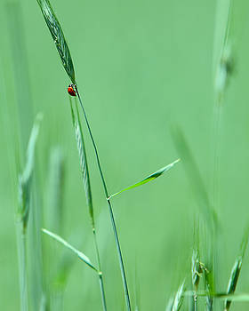 Ladybug by Walt Stoneburner