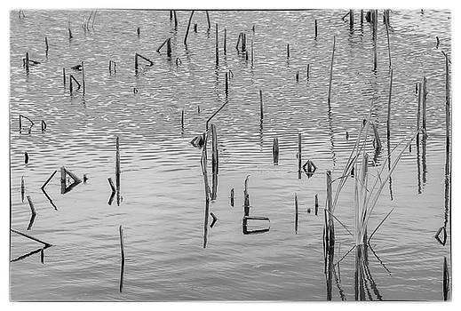 Lake abstract by Carolyn Dalessandro