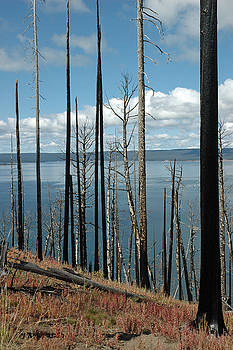 Lake Butte Firescape in Yellowstone by Bruce Gourley