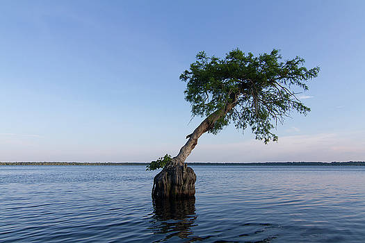 Paul Rebmann - Lake Disston Cypress #1