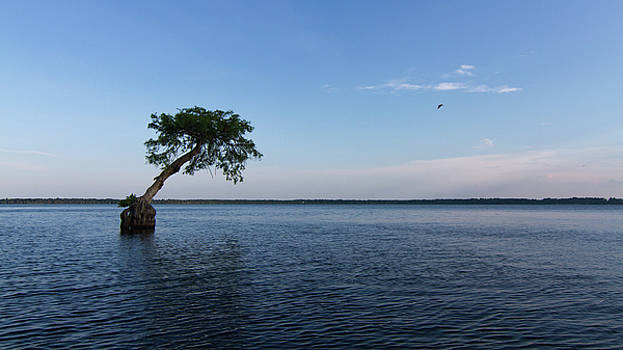 Paul Rebmann - Lake Disston Cypress #2