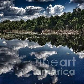 Lake Griffen, Florida by Beth Jacobs