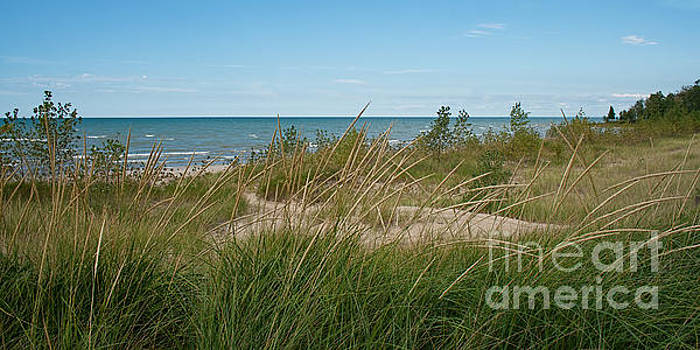 Barbara McMahon - Lake Huron Sand and Grasses