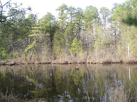 Lake In The Woods by Jennifer  Sweet