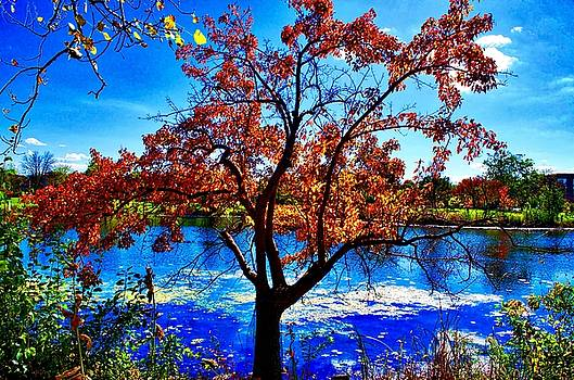 Lake Kathy by Collette Rogers