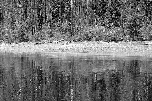 Lake McDonald Shoreline Reflection Blacka and White by Bruce Gourley