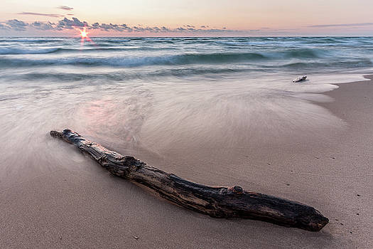 Lake Michigan Driftwood by Adam Romanowicz
