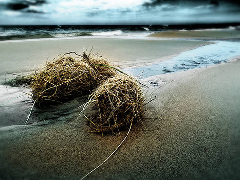Lake Michigan tumbleweed by Kelly Morrow