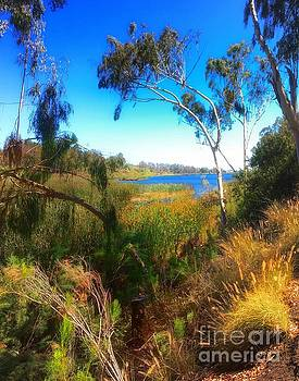 Lake Murray Paradise by John Castell