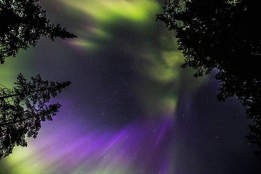 Lake of the Woods Summer Aurora - Looking Up 01 by Jakub Sisak