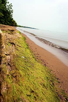 Lake Ontario Shore by Tim Buisman