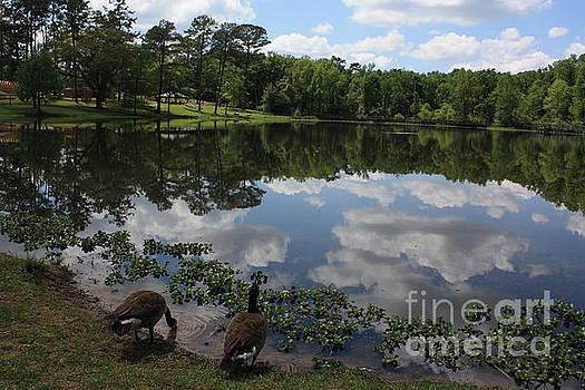 Lake Reflection by Danielle Groenen