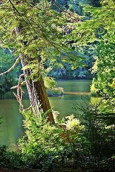 Lake Sylvia State Park by Edward Coumou