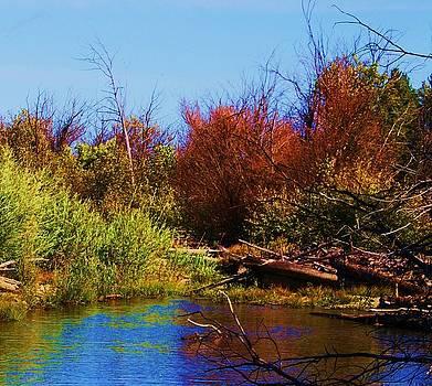 Lake Tahoe-Taylor Creek by Russell  Barton
