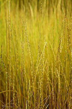 LeeAnn McLaneGoetz McLaneGoetzStudioLLCcom - Lake Tahoe wild Grasses
