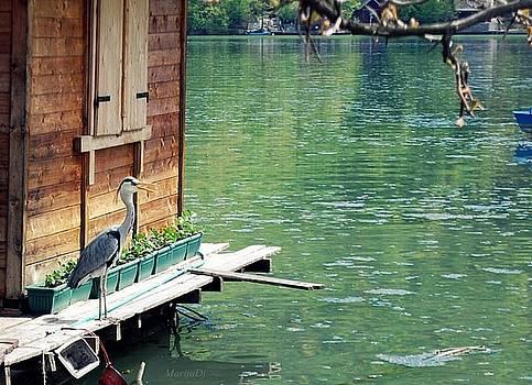 Lake watch by Marija Djedovic