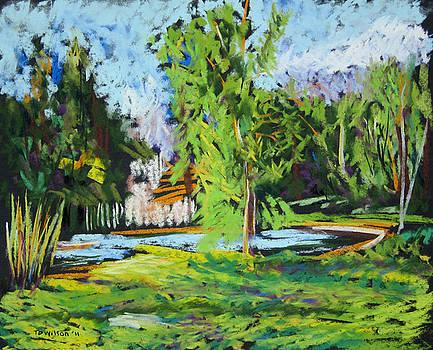 Lake with cedar by TD Wilson