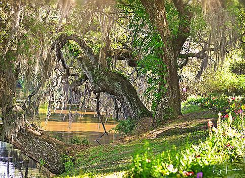 Lakeside Live Oaks by Lj Lambert