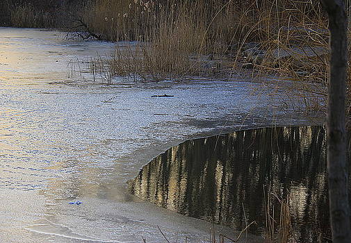 Lakeside Reflections on a Winter Day by Dora Sofia Caputo Photographic Design and Fine Art