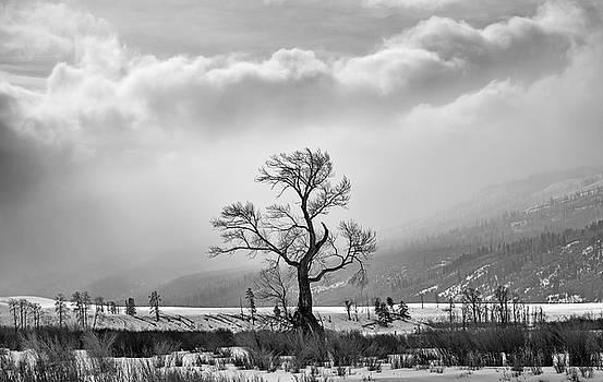 Max Waugh - Lamar Valley Tree