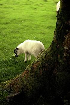 Lamb 2 by Alexa Gurney
